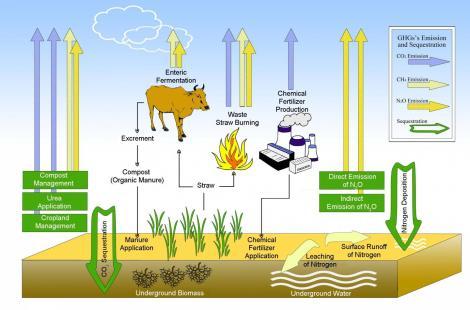 greenhouse organic farming